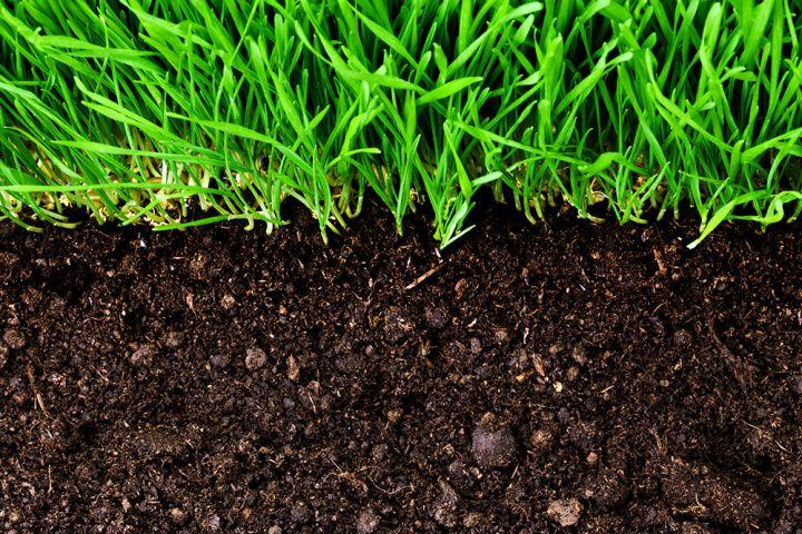 Ультразвуковые технологии в агробизнесе — новые возможности